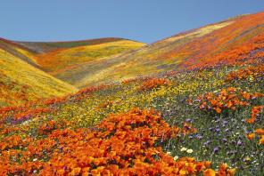 Valley for flowers