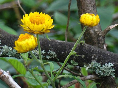 Flora at Nilgiri Biosphere Reserve