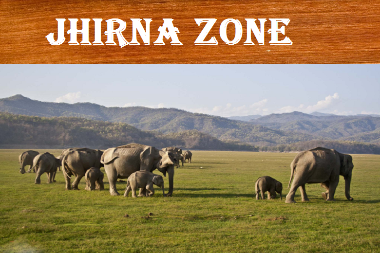 Jhirna zone in Jim Corbett