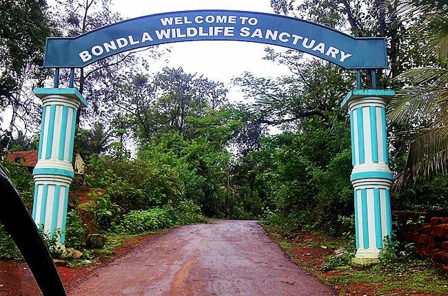 Bondla wildlife sanctuary in Goa