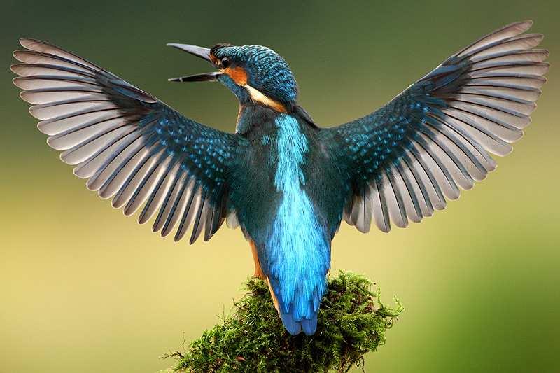 Beautiful Birds in Goa Sanctuary