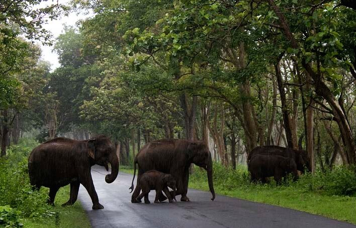 Biligiriranga Hills Karnataka