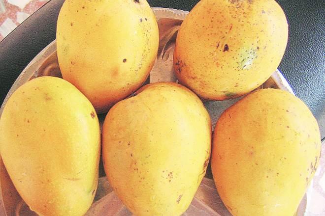 Mangoes National fruit of India