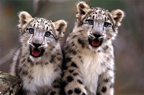 Fauna at Himalayas