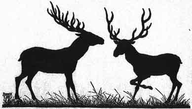 Beautiful story of two Deer