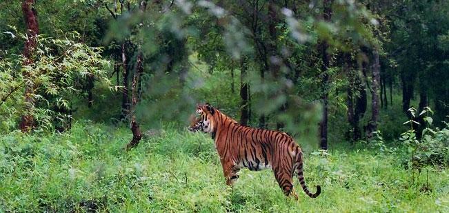 Bhadra Tiger Reserve