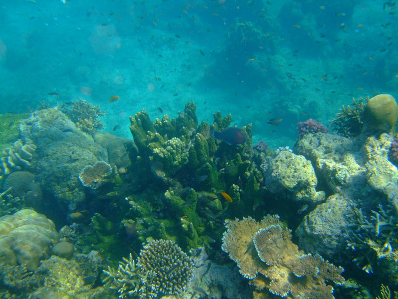 Corals in Neil Island