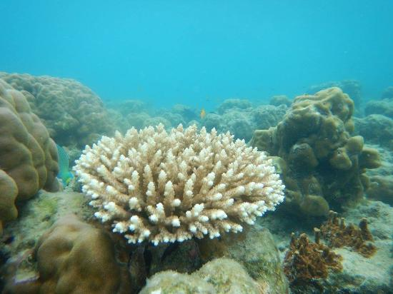 Corals in Andaman Beach