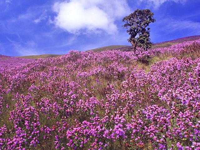 Breath taking Flora at Nilgiri Biosphere Reserve